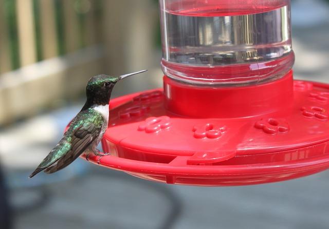 How to Make Hummingbird Food – Guide to Feeding Hummingbirds