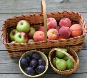 Large basket full of apples and two smaller baskets full of pears and plums sit on a wooden picnic table.
