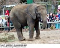 Scotty the Elephant's Third Birthday