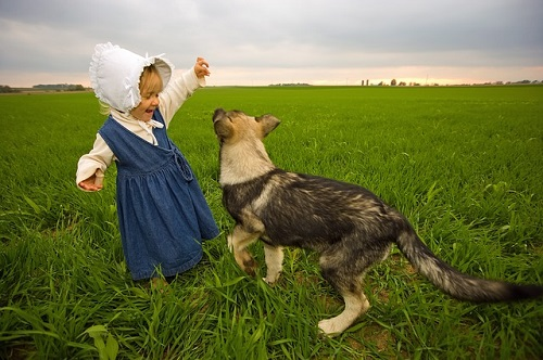 Best Dog Breeds for Families with Children – More than the German Shepherd