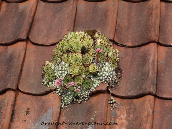 Exclusive Interview with Certified Horticulturalist and Garden Blogger Jacki Cammidge
