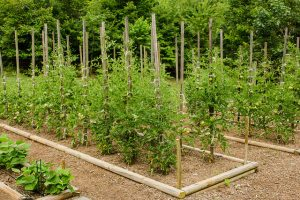 Economy of Vertical Gardening