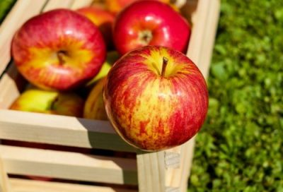 wooden crate filled with fresh red apples with hints of gold. One apple in the foreground.